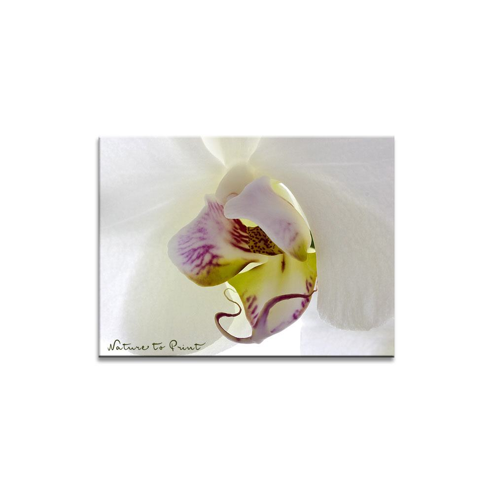 Orchideenbild: Big white Orchid